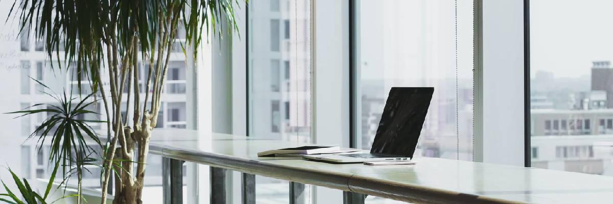 Planten op kantoor: 4 leuke ideeën voor meer sfeer